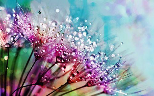 Dewdrops & Rainbows