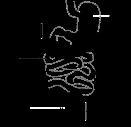 diagram digestive system