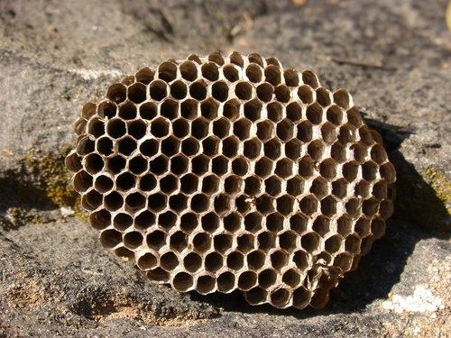 diaper  wasps' nest  exag