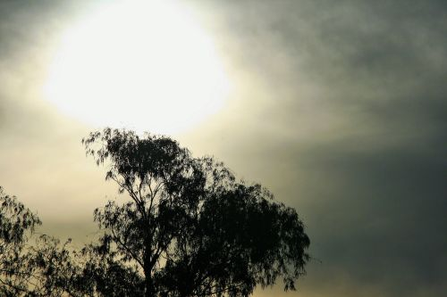 Diffused Sun And Tree