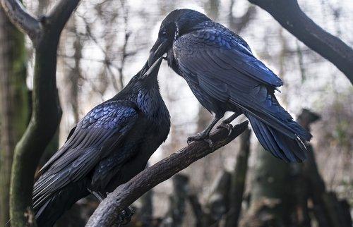 dig  love  bird