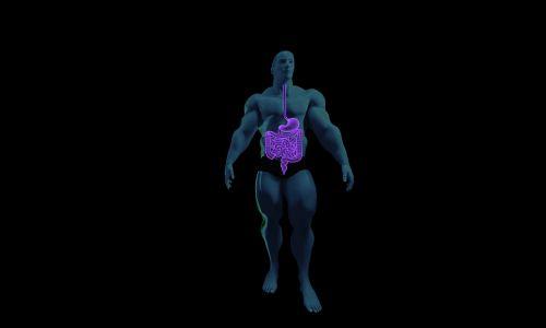 digestive system anatomy human anatomy
