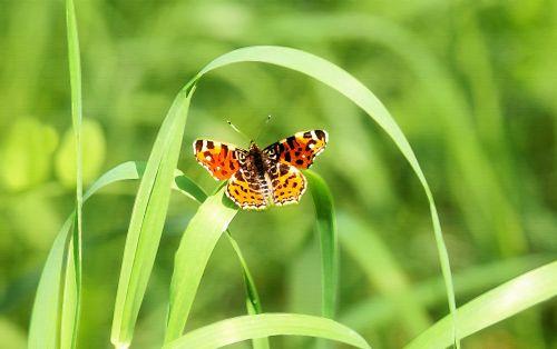 dažymas, menas, skaitmeninis & nbsp, menas, skaitmeninis & nbsp, tapyba, meno kūriniai, naftos & nbsp, dažymas, drugelis, žolė, vasara, gamta, gėlių, žalias, skaitmeninis gamtos paveikslas