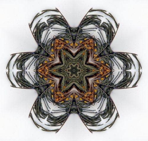 Digital Patterned Mandala
