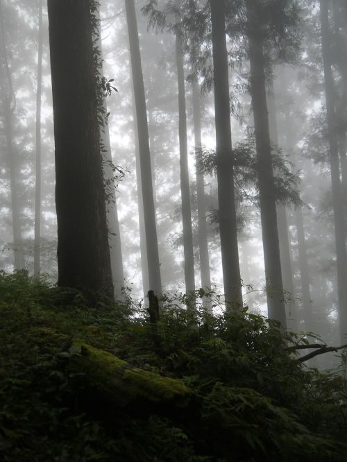 dim 朧 beauty mountains woodland