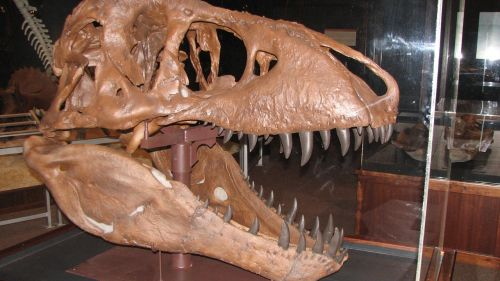 dinosaur montana dinosaur fossils