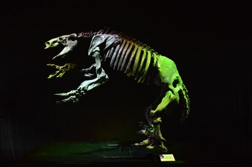 dinosaur replica sample