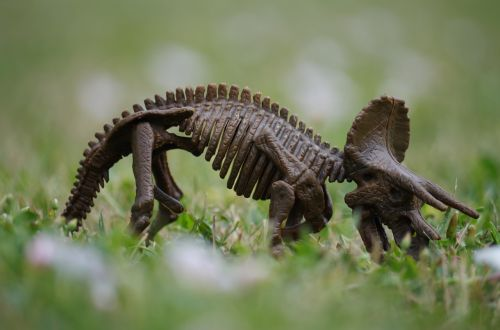 dinosaur bones herbivore