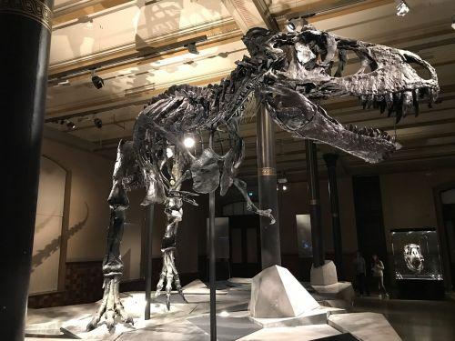 dinosaur museum t rex