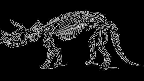 dinosaur triceratops fossil