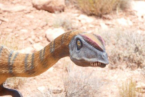 dinosaur  raptor  fossil