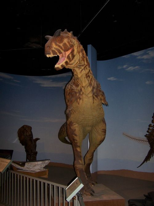 dinosaur museum model
