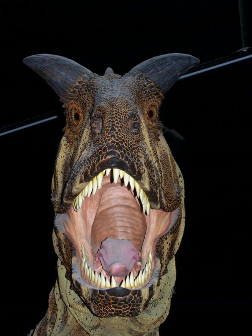 dinosaur museum carnivore