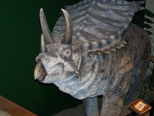 dinosaur triceratops reptile