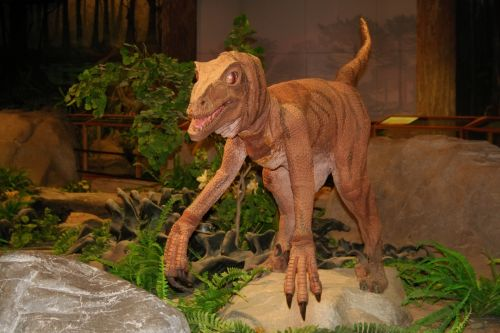 Dinosaur In A Museum 2