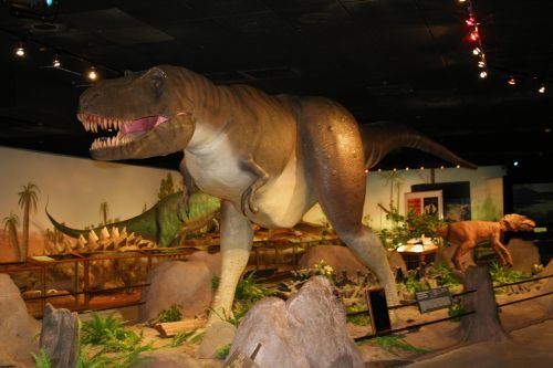 Dinosaur In A Museum 4