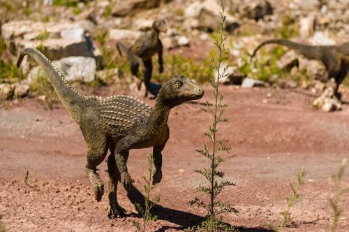 dinosaur gad mammal
