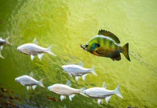 diorama  fish  museum
