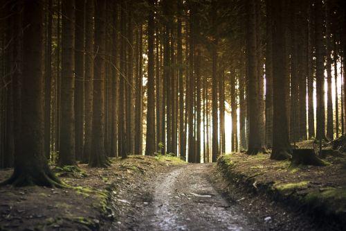 purvo kelias,miškas,kraštovaizdis,gamta,kelias,kelias,augalai,dirvožemis,takas,trasos kelias,medžių kamienus,medžiai,kelias,miškai