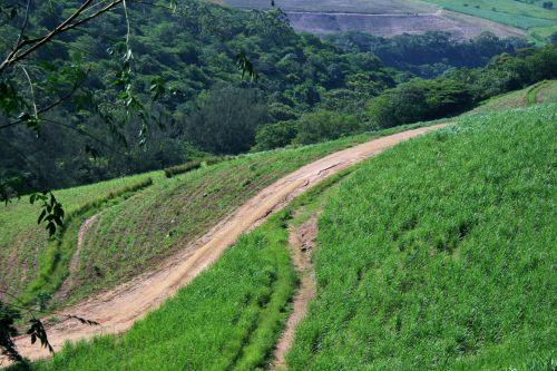 Dirt Trails On Sugar Cane Estate
