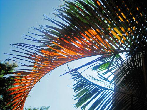 Discoloured Palm Leaf