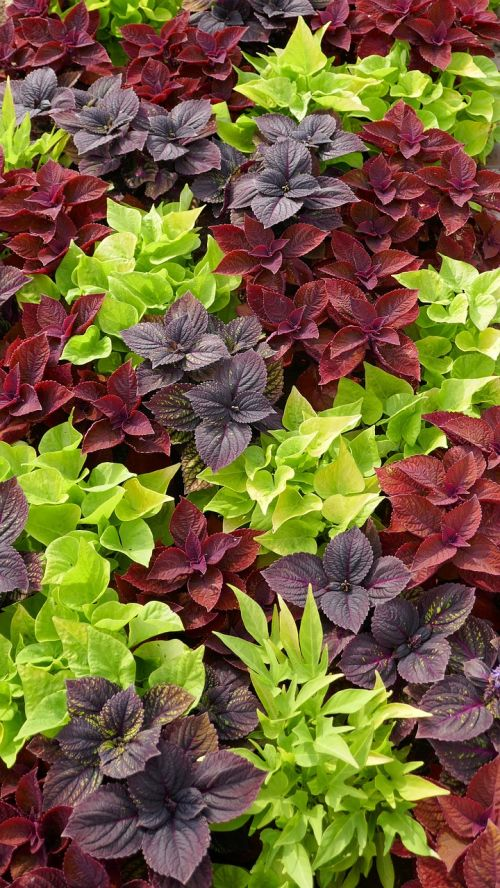 discounts ground cover three coloured