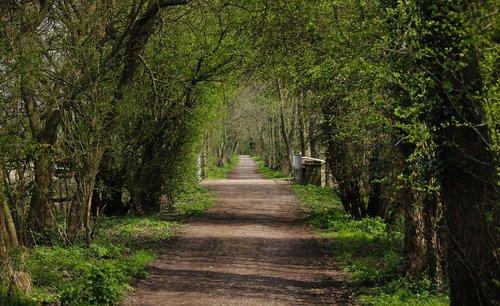 disused railway  east sussex england  walkway