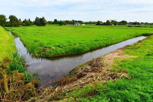 ditch  water  meadow