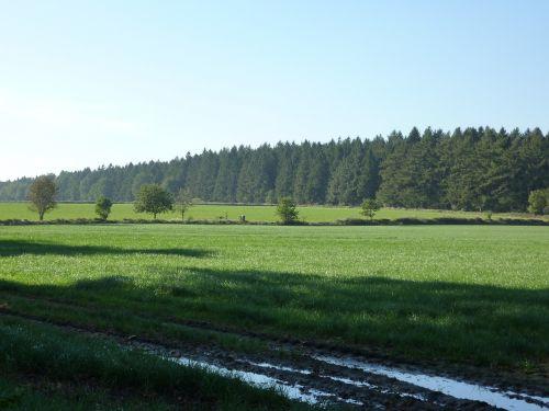 dithmarschen landscape meadow