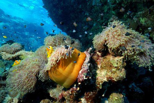 diver sea diving