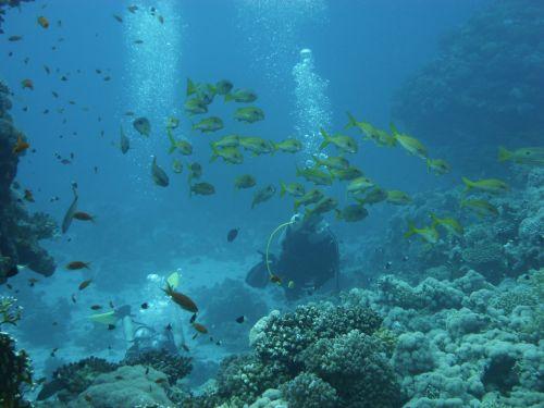 divers reef diving