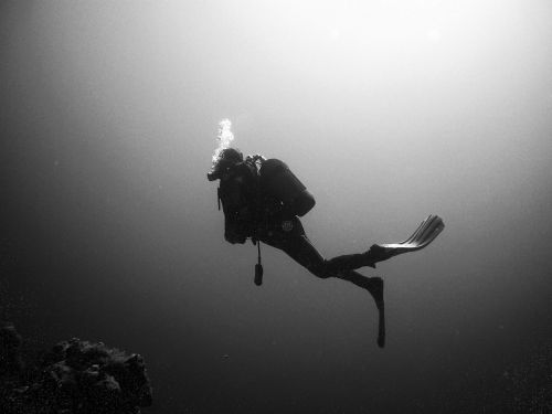 divers diving underwater