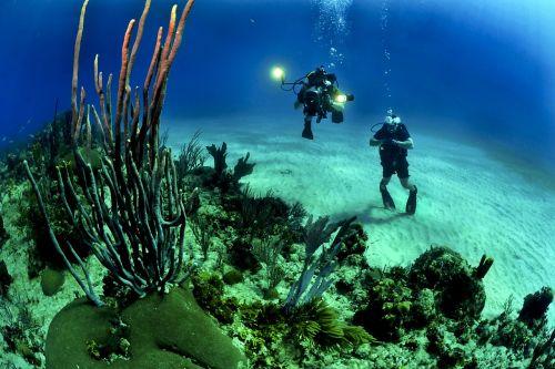 divers scuba reef