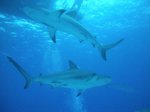 diving dive nassau