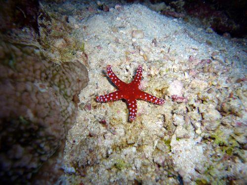 diving underwater water