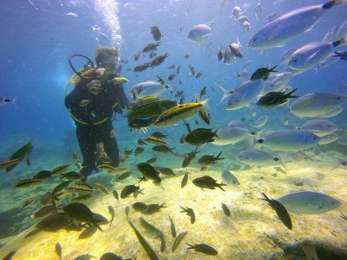 diving sea fish