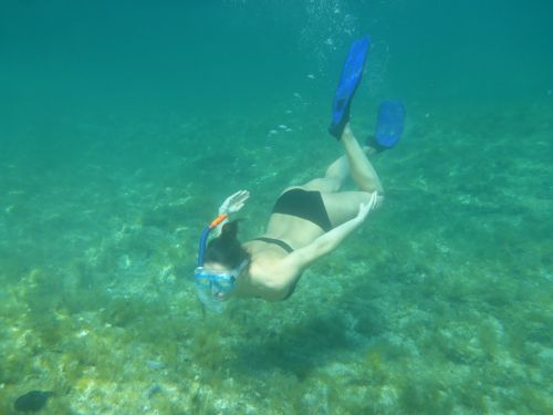 diving snorkeling nature
