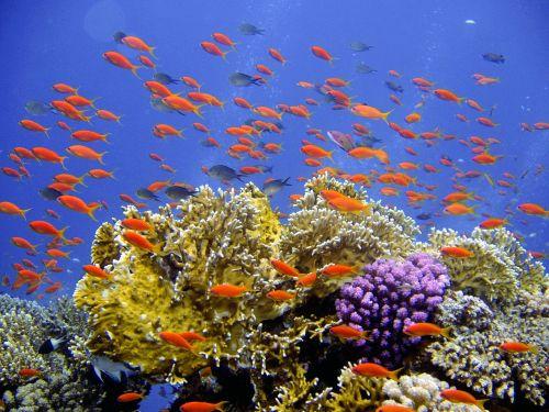 diving underwater reef
