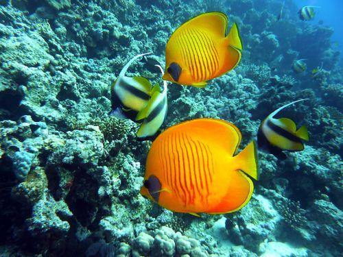 diving underwater dive