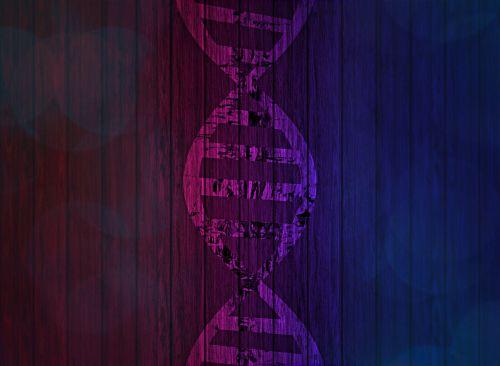 dna deoxyribonucleic acid genetic information