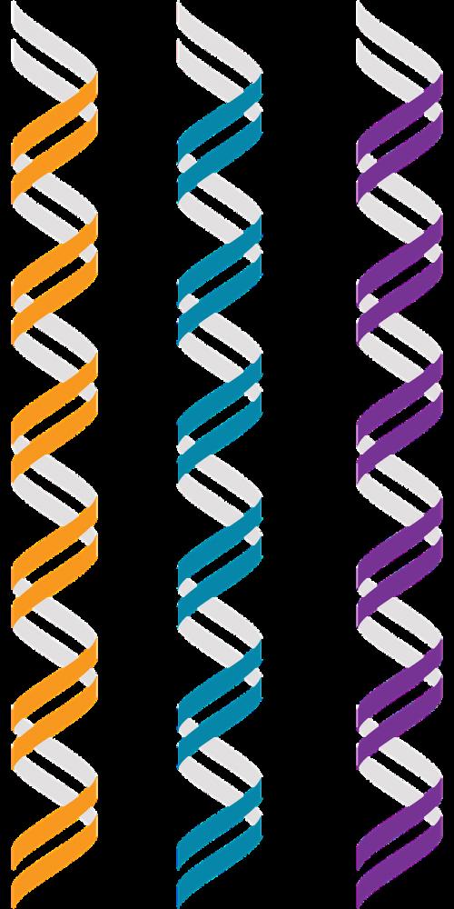 dna b-dna genetics