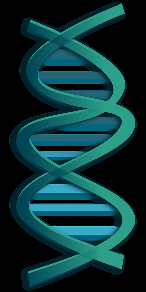 dna rna genes