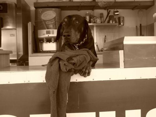doberman dog snack