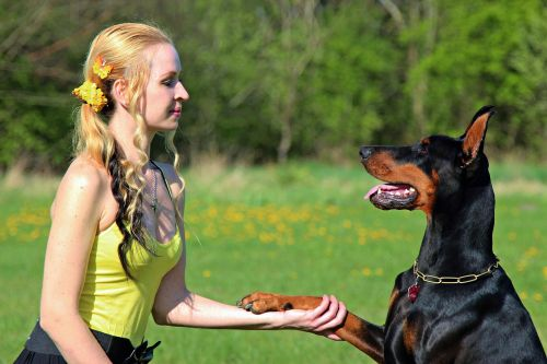 doberman blonde woman friendship