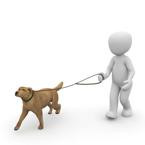 šuo,gassi,eiti,paleisti,pakabukas,vaikščioti,vaikščioti,šuns pavadėlis