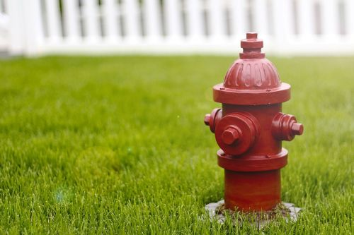 dog fire hydrant red