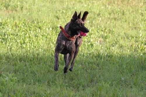 dog nature doggy