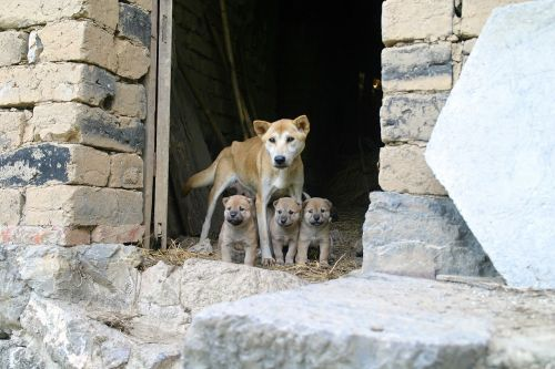dog puppies family