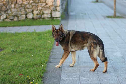 dog wolf homeless