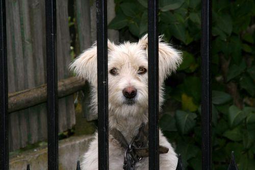 dog fence curiosity